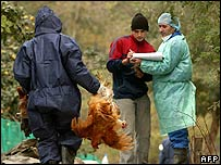 Romanian health workers picking birds from a local village.