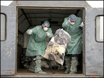 Romanian health workers throw bags of dead domestic birds into a pit in Ceamurlia de Jos