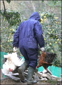 A Romanian health worker carries domestic birds before gassing them in the village of Vulturul, Romania