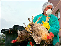 Romanian vet collects chickens from farm