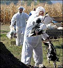 Vets destroying fowl in Macedonia