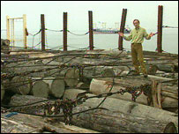 Roger Harrabin with illegally traded timber