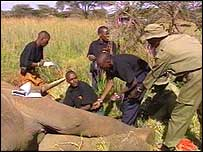 Elephant being sedated