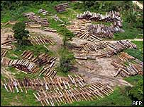 Logging in Brazil's Amazon rainforest