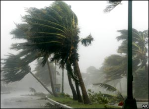 Palms blown in hurricane winds in Cancun, Mexico