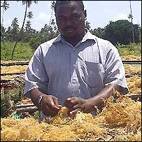A seaweed buyer in Pemba, Tanzania