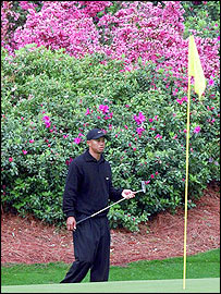 Tiger Woods amongst the azaleas