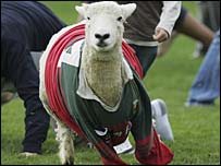 A sheep is chased at half-time in Wairarapa