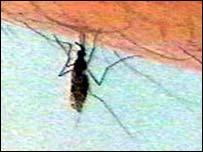 Image of mosquito biting