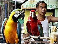 Birds on sale in Jakarta, Indonesia