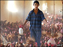 A boy sprays disinfectant on chickens in Iraq