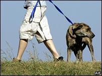Perro caminando por el parque
