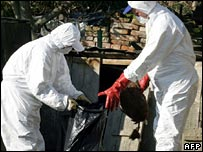 Croatian Ministry of Agriculture officials in protective clothing fill a plastic bag with birds they have killed