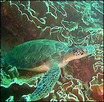 Turtle  (photo: Tira Shubart)