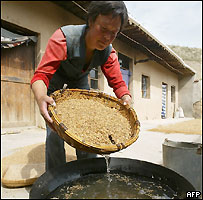 Farmer Li Yuping washing oats in a basin of water in China's north-west Gansu province, September 2004