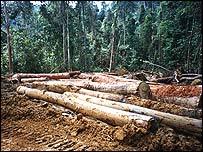 Logging in Sumatra