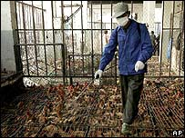 A health worker sprays disinfectant over caged chickens on sale at a market in Shanghai, China.