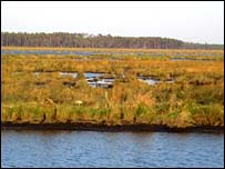 Coastal marsh by Lake Pontchartrain damaged by the hurricane