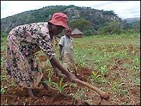 Zimbabwean farmers