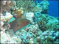 Arrecife de coral en el Parque Nacional Marino de Tubbataha. Foto: cortesía TRNMP-TMO