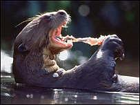 Nutria gigante de ro