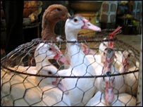 Caged ducks in a Vietnamese street market