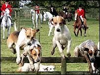 Hounds on a hunt