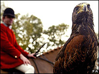 Alice the hawk joins the Cheshire Forest Hunt