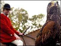 Alice the hawk in Cheshire