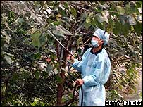 Chinese worker sprays disinfectant into trees in Sichuan Province