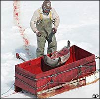 Seal hunt