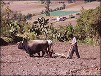Campo peruano
