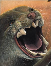 An artist's impression of a marsupial lion (Wroe)