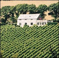 Camel Valley Vineyard at the height of summer