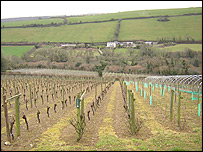 Camel Valley