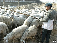 A Chinese farmer herds his sheep in a village near Beijing Tuesday Dec. 10, 2002.