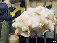 В Китае забивают кур