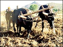 Farmer using plough in Angola