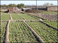 Chinese vegetable farm