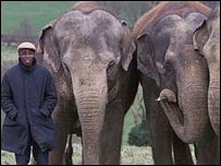 Chris Ofili and elephants