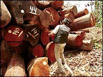 Logging, Daniel Beltra / Greenpeace / PA