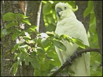 Generic image of a cockatoo
