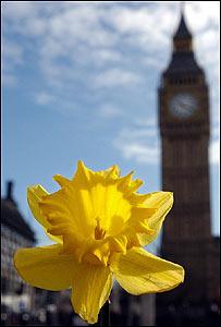 Flor de narciso con el Big Ben de fondo