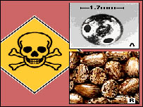 Graphic showing ricin