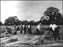 Harvest scene in 1880 on the Broadbalk classical experiment (Lawes Agricultural Trust)