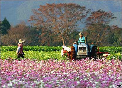 Farmers in Japan