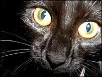 Cat (file photo)