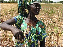 Woman picking cotton in Mali