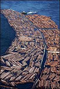 Barcaza acarreando troncos en un río