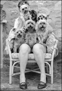 Dogs sitting on a woman's lap